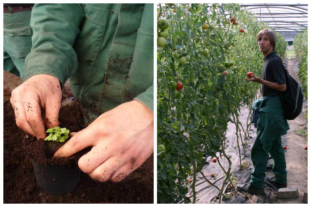 Bilder Ökologischer Gemüsebau